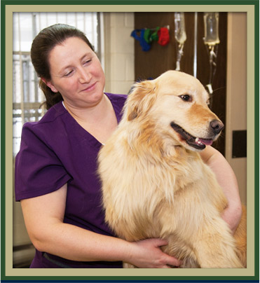Wellness Care for Pets